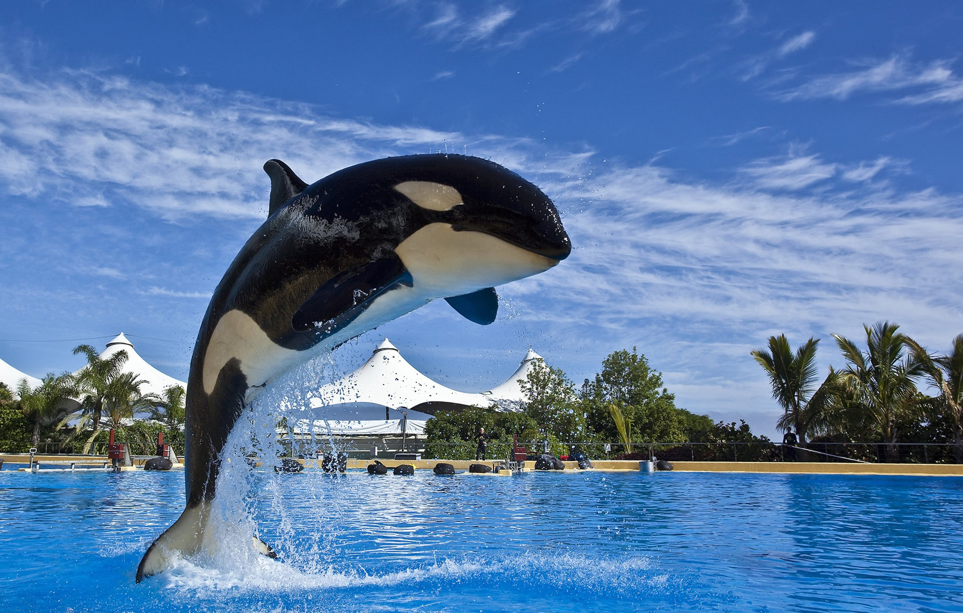 Resultado de imagen de orcas loro parque